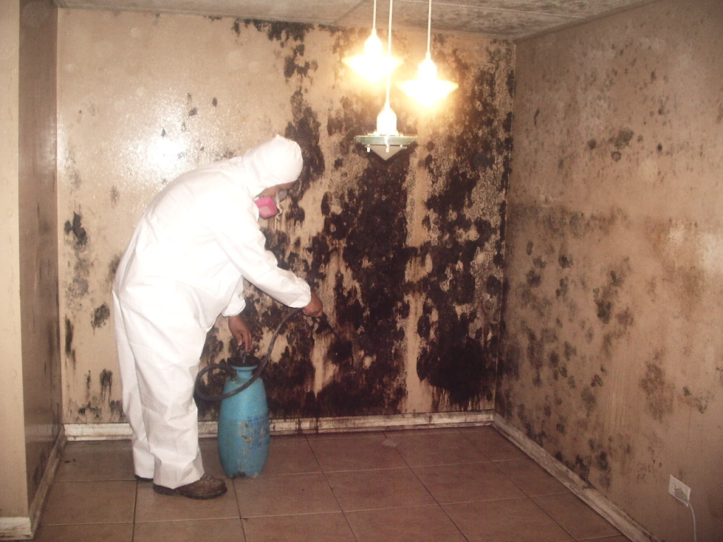 Mold Removal Baltimore