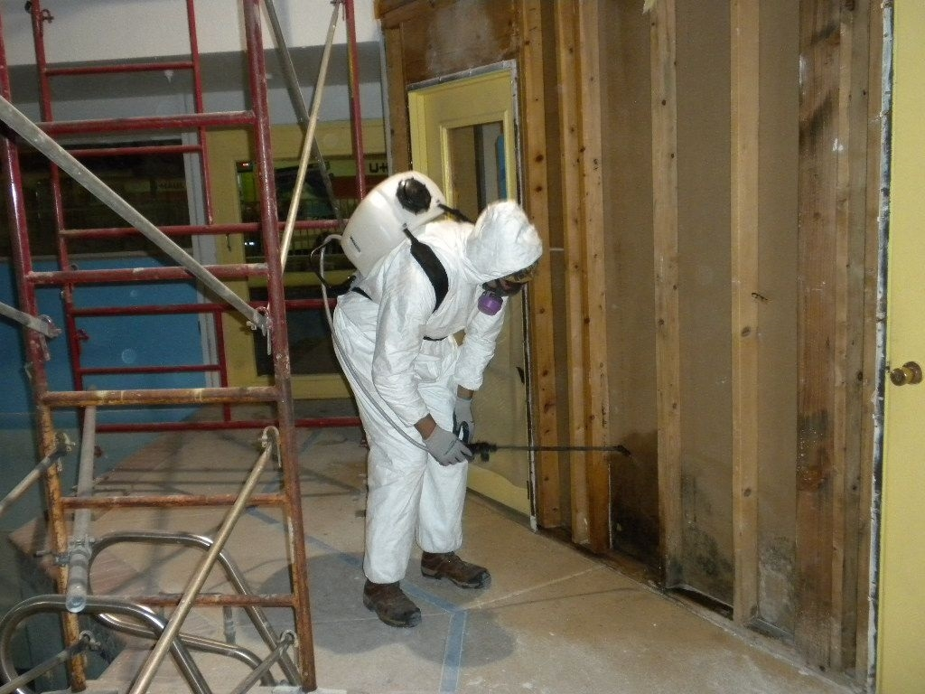 Mold_remediation_Annapolis