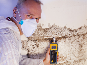 Mold Inspection Baltimore