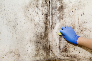 Mold Removal Furniture Baltimore