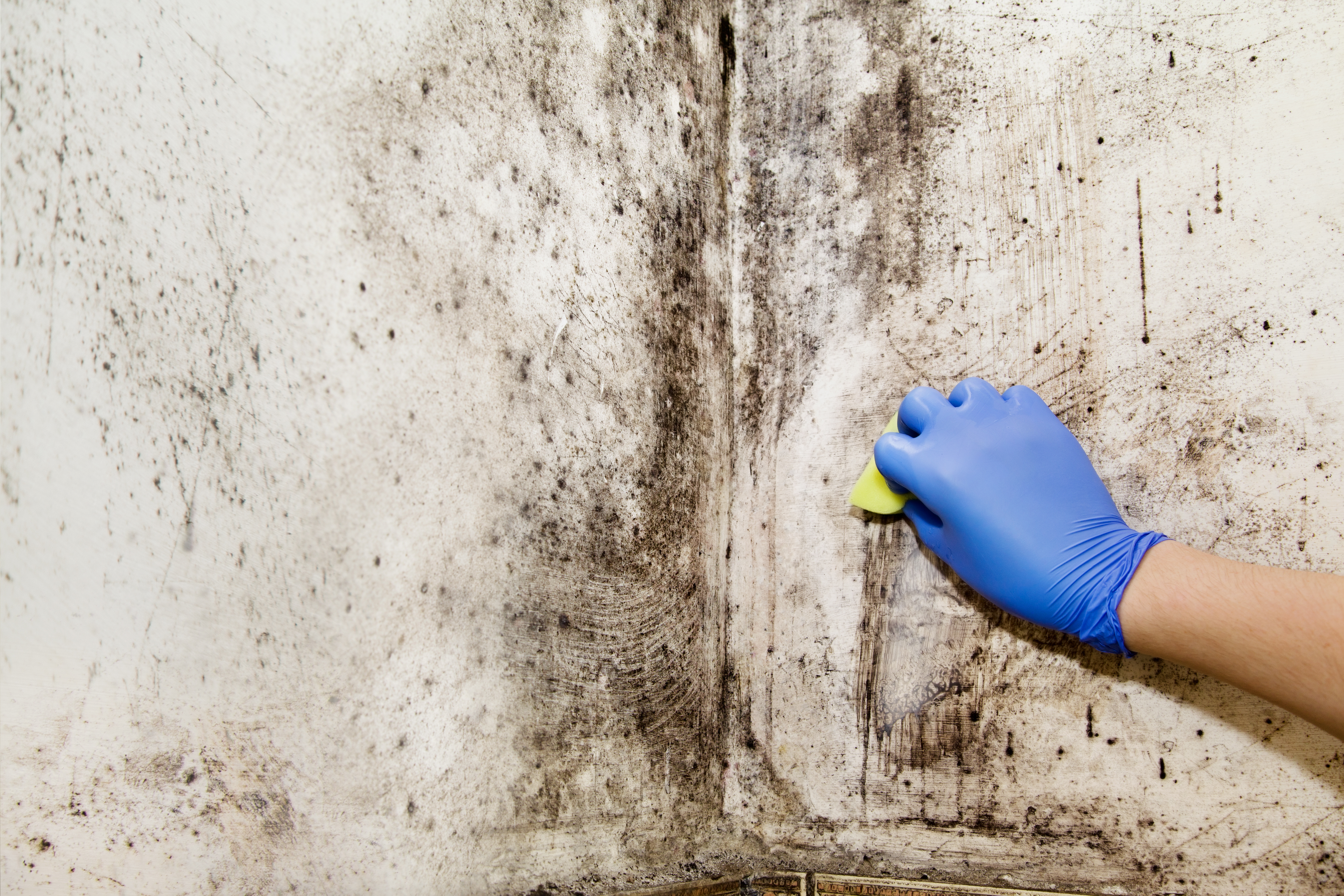 Mold Removal Furniture Baltimore How To Remove From Wood