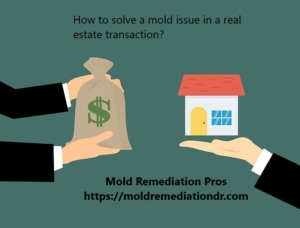 mold in a real estate transaction